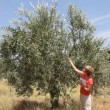 Female agronomist examine olive tree orchard — Stock Video #49842875