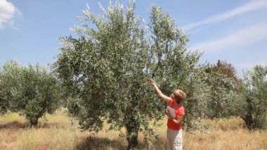 Female agronomist examine olive tree orchard — Stock Video