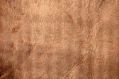 Suede leather — Stock Photo