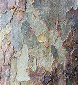 Bark tree trunk — Stock Photo