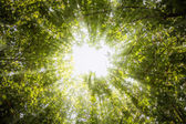 Rays of light through the leaves of the trees — Stock Photo