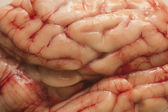 Brain texture — Stock Photo