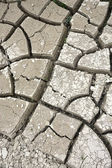 Cracked dry ground — Stock Photo