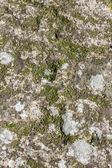 Stone with moss — Stock Photo