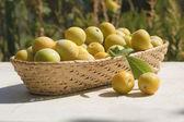 Basket of yellow plums — Стоковое фото