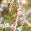 Candy cane in a christmas tree — Stock Photo #18509181