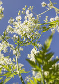 Low angle view of white flowers — Stock Photo
