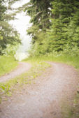 Dirtroad in woods — Stock Photo