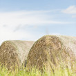 Silage bales in summer landscape — Stock Photo #21733589
