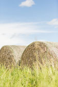 Silage bales in summer landscape — Stock Photo
