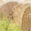 Stock Photo: Silage bales in summer landscape