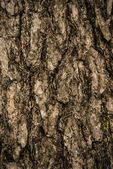 Trunk of a pine tree — Stock Photo