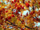 Золотая осень. Фотоиллюстрация — Foto de Stock