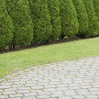 Hedge of cypress trees near the lawn — Stock Photo