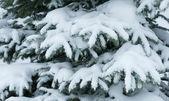 árbol de invierno cubierto de nieve — Foto de Stock