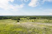 La vista superior en un campo floreciente de verano — Foto de Stock