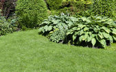 A beautiful landscaped garden with a variety of perennials and — Stock Photo