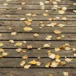 Autumn birch leaves and pine needles on a dark wooden terrace — Stock Photo