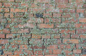 Old moss-grown brick wall as background — Stock Photo
