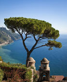 Lone tree in Ravelo, Italy vertical — Stock Photo