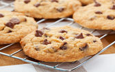 Chocolate chip cookies — Stockfoto