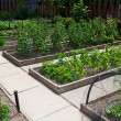 Foto Stock: Raised Vegetable Garden Beds