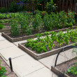 Raised Vegetable Garden Beds - Stock Photo