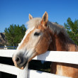 Horse in Corral — Foto Stock
