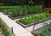 Raised Vegetable Garden Beds — Stock Photo