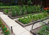 Upphöjd vegetabiliska trädgård sängar — Stockfoto
