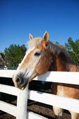 Horse in Corral — Stock Photo