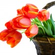 Stock Photo: Basket of Tulips