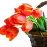 Basket of Tulips — Stock Photo