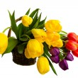 Fresh Cut Tulips — Stock Photo