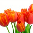 Spring Tulip Bouquet — Stock Photo