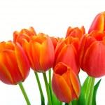 Spring Tulip Bouquet — Stock Photo #15645533