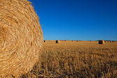 Big Round Haybales — Stock Photo
