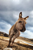 Curious Little Donkey — Foto Stock