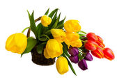 Fresh Cut Tulips — Foto Stock