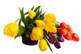 Fresh Cut Tulips — Stock Photo