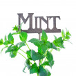 Mint with Garden Marker — Photo