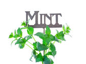 Mint with Garden Marker — Stockfoto