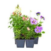 Utplanteringsväxter — Stockfoto
