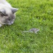 Cat and Mouse — Foto Stock