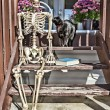 Stock Photo: Backstep Skeleton & Black Cat