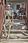 Backstep Skeleton & Black Cat — Stock Photo