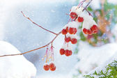 Winter's Beautiful Bounty — Stock Photo