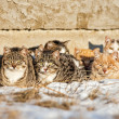 Stock Photo: Feral Cats