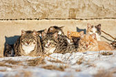Feral Cats — Stock Photo