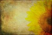Vintage Sunflower — Stock Photo